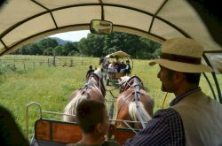 Tour of the Maremma by horse and wagon